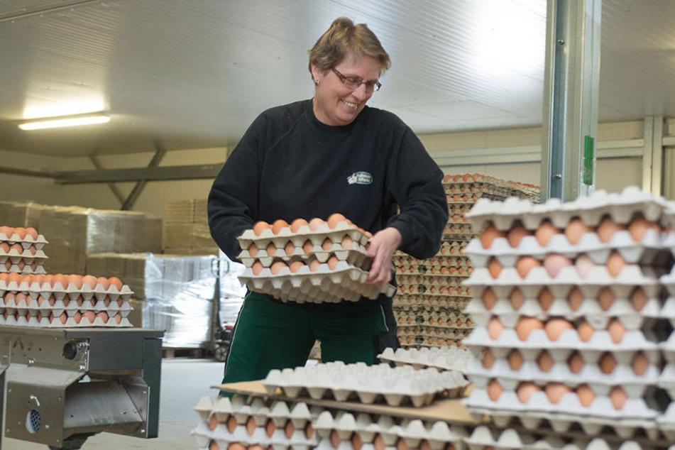 Petra Loschelders schichtet Paletten mit frischen Eiern auf. Die werden aus den Nestern über ein Förderband direkt in die Sortieranlage befördert.