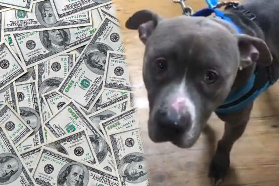 Hund mit den traurigsten Augen der Welt: Belohnung auf Täter ausgesetzt