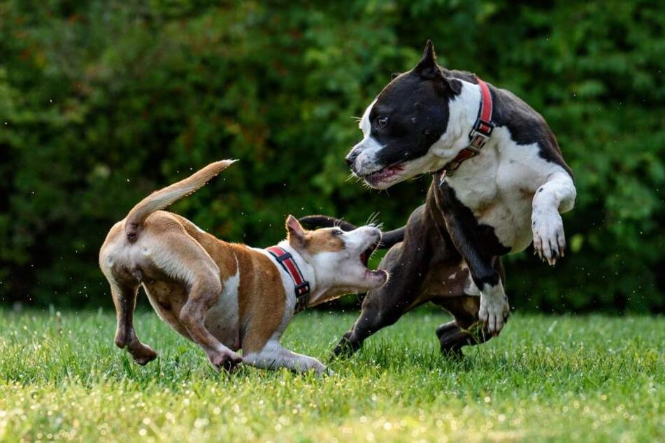 Der Kontakt mit fremden Hunden lässt sich im Alltag nur schwer vermeiden.