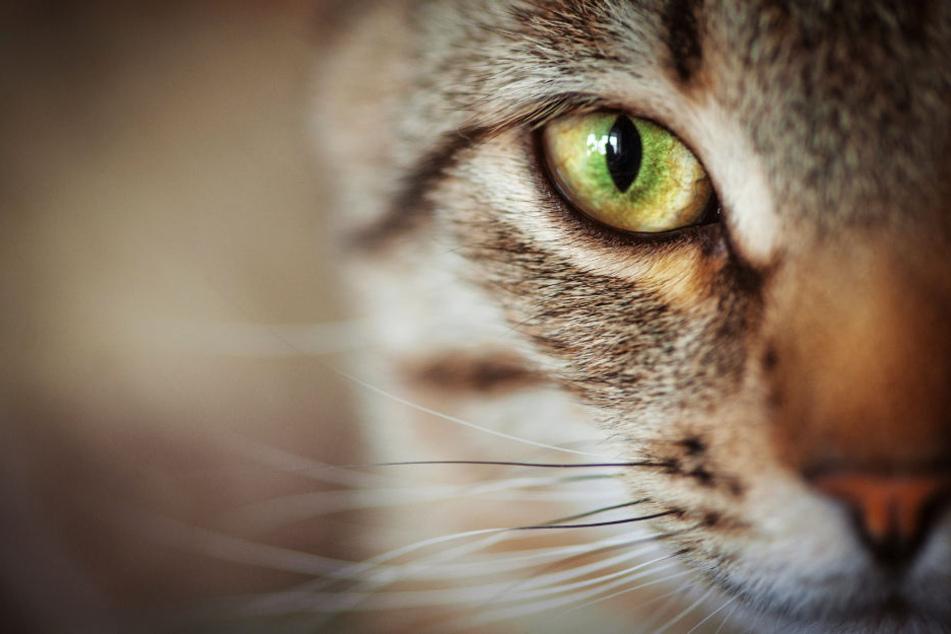 Zwei Katzen sind dem Killer schon zum Opfer gefallen (Archivbild).