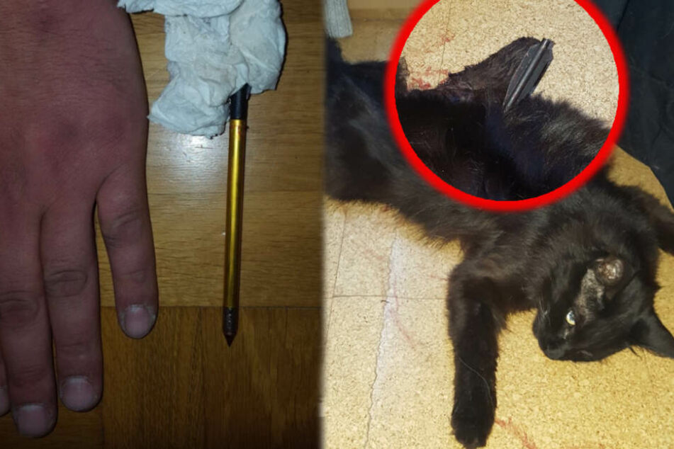 Die Besitzerin fand das Tier tot auf dem Dachboden.