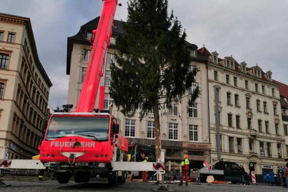 Leipzig: Nach schwerer Suche: Leipzigs Weihnachtsbaum ist da!