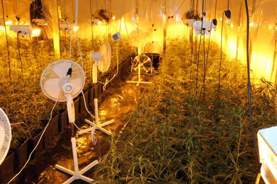 1100 Pflanzen fanden die Beamten in der Halle.