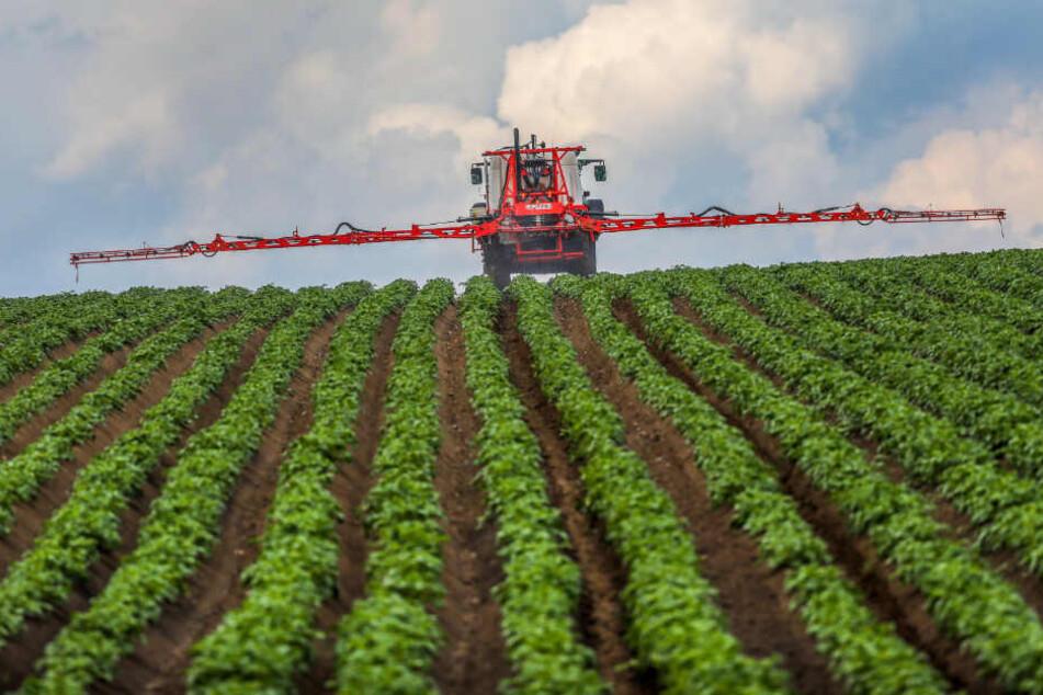Ein Landwirt spritzt Pestizide auf ein Feld. (Symbolbild)