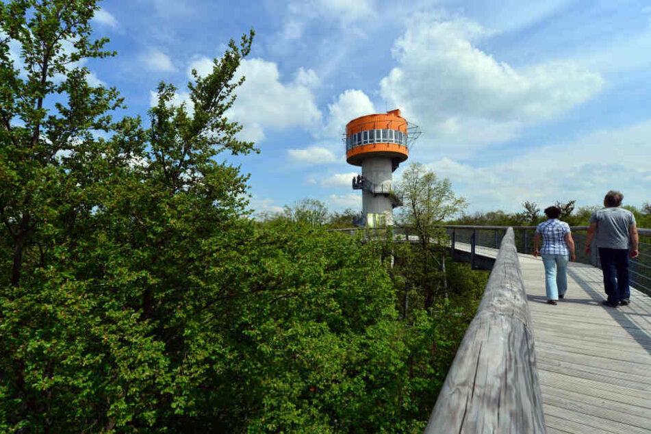 Der Baumkronenpfad im Hainich gehört zu den größten Touristenattraktionen in Thüringen.