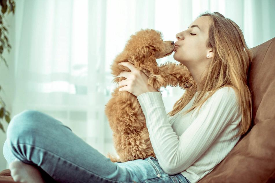 Viele Hundebesitzer geben ihren Hunden gerne mal einen Kuss auf die Schnauze.