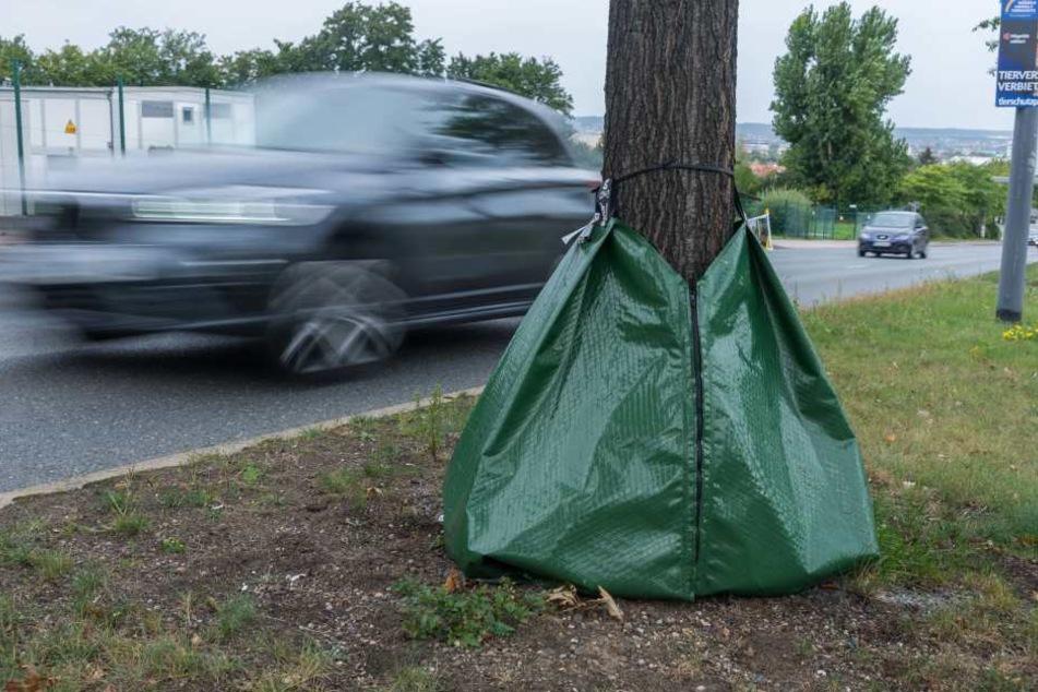 Die Säcke erleichtern das Bewässern und Düngen der Bäume.