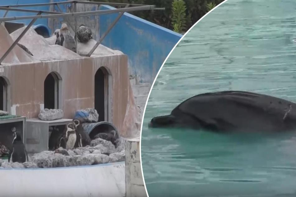 """46 Pinguine und Delfin """"Honey"""" fristen in dem verlassenen Marinepark ein trauriges Dasein."""