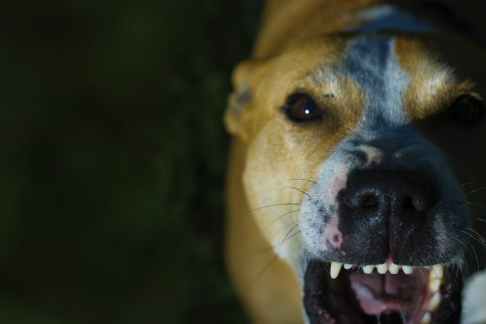 Fünfjährige gebissen! Gleich zwei Hunde-Attacken an einem Tag