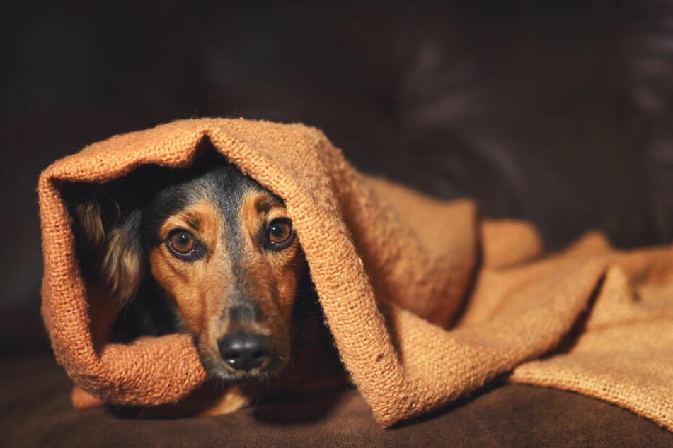 Hunde können Ängste mit viel Geduld wieder ablegen.