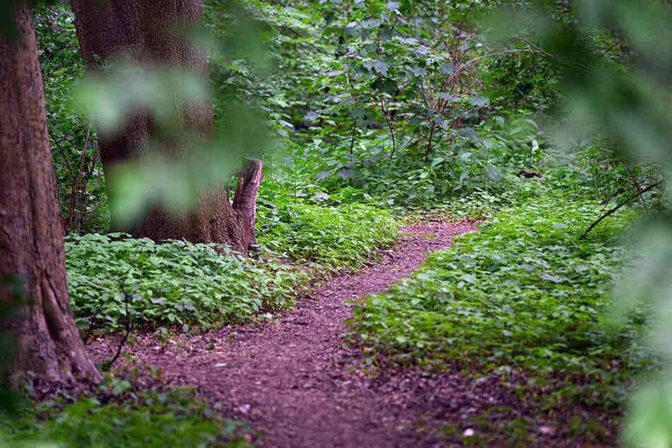 In einem Gebüsch neben dem Waldweg entdeckten die Frauen den Mann. (Symbolbild)