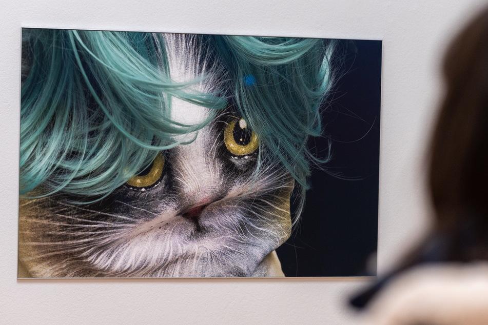"""Bei der Fotografie """"Katze"""" sollte der Betrachter genau hinschauen, bevor er entscheidet, was er zu sehen glaubt."""