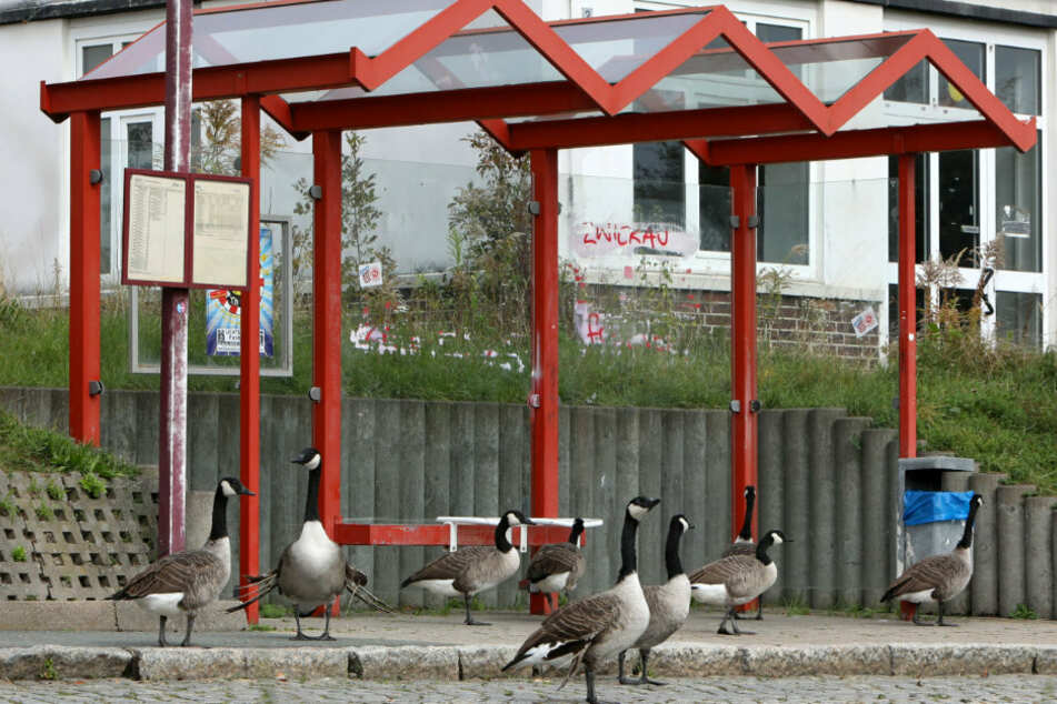 Die Vögel machten auch an einer Bushaltestelle einen Zwischenstopp.