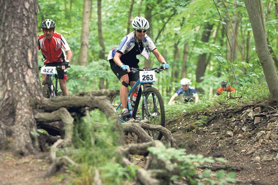 Immer mehr Mountainbiker sind in der Heide unterwegs. Wege und Waldböden  leiden unter der starken Belastung.