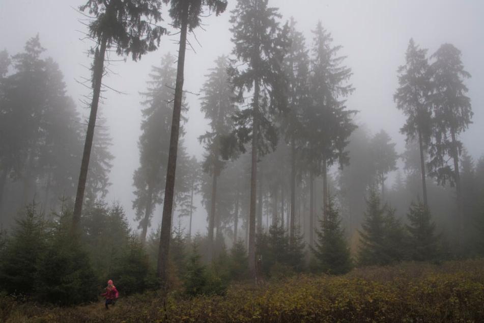 Wald voller Fliegerbomben! Was die Gemeinde dann macht, verblüfft