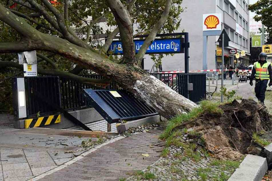 Baumpflege-Unternehmen haben alle Hände voll zu tun, umgestürzte Bäume zu beseitigen.