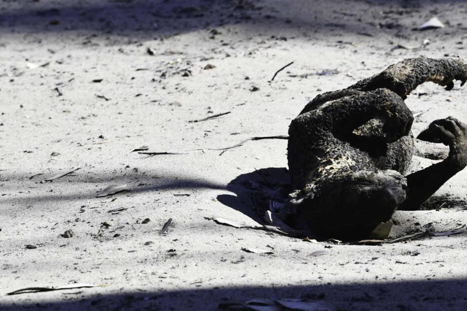 Mehr als eine Milliarde Tiere sind wohl ums Leben gekommen, weitere werden folgen.