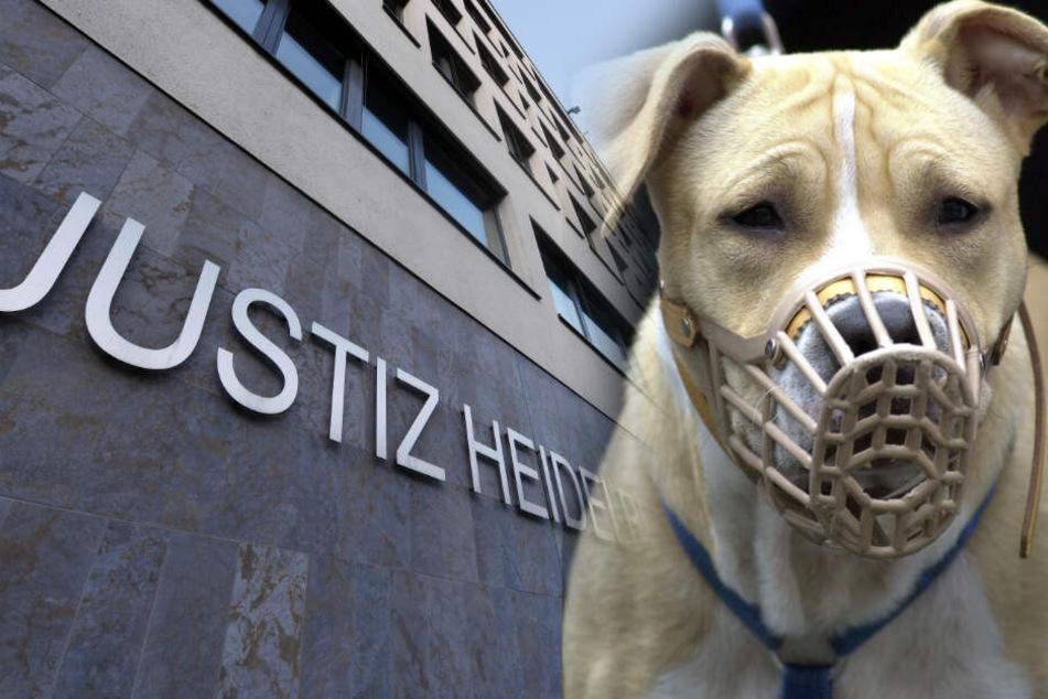 Kampfhund auf Teenager gehetzt: Junge Männer legen nach Urteil Revision ein