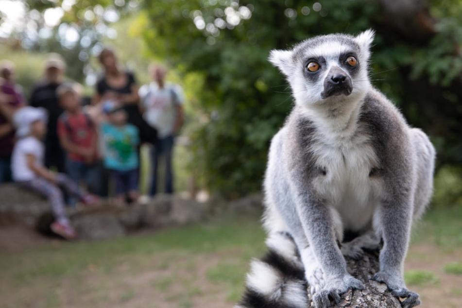 Spannende Infos, neugierige Zuhörer: So lief der Dresdner Zoo-Tag ab