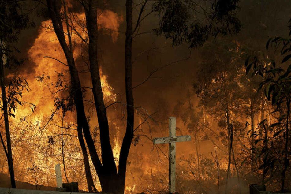 Das Hillville Buschfeuer brennt am Pacific Highway am Possum Brush. Buschbrände halten Australiens Bundesstaaten New South Wales und Queensland seit Oktober in Atem, beide Regionen haben den Notstand ausgerufen.