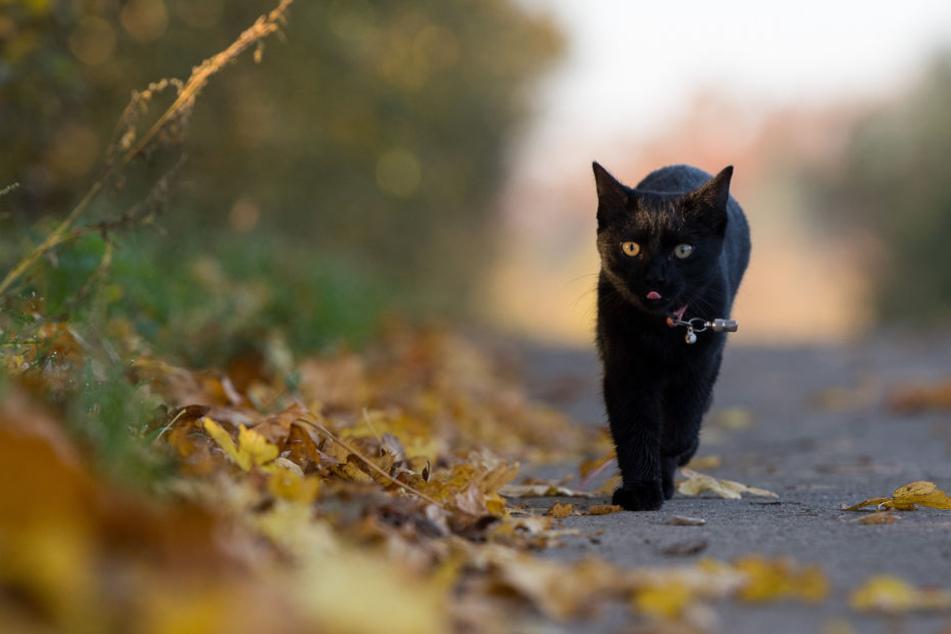 Das Umherstreifen wurde einer Katze in Heldrungen zum Verhängnis. Auf brutale Art wurde sie von Unbekannten gequält. (Symbolbild)