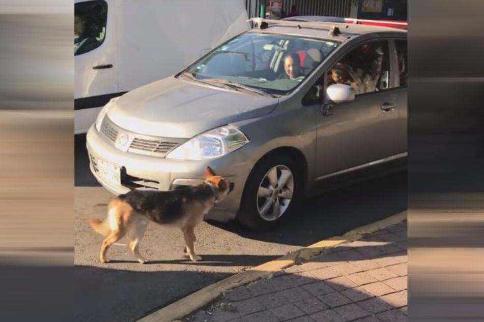 Laut des Zeugen, saß die Familie des Hundes in diesem Auto.