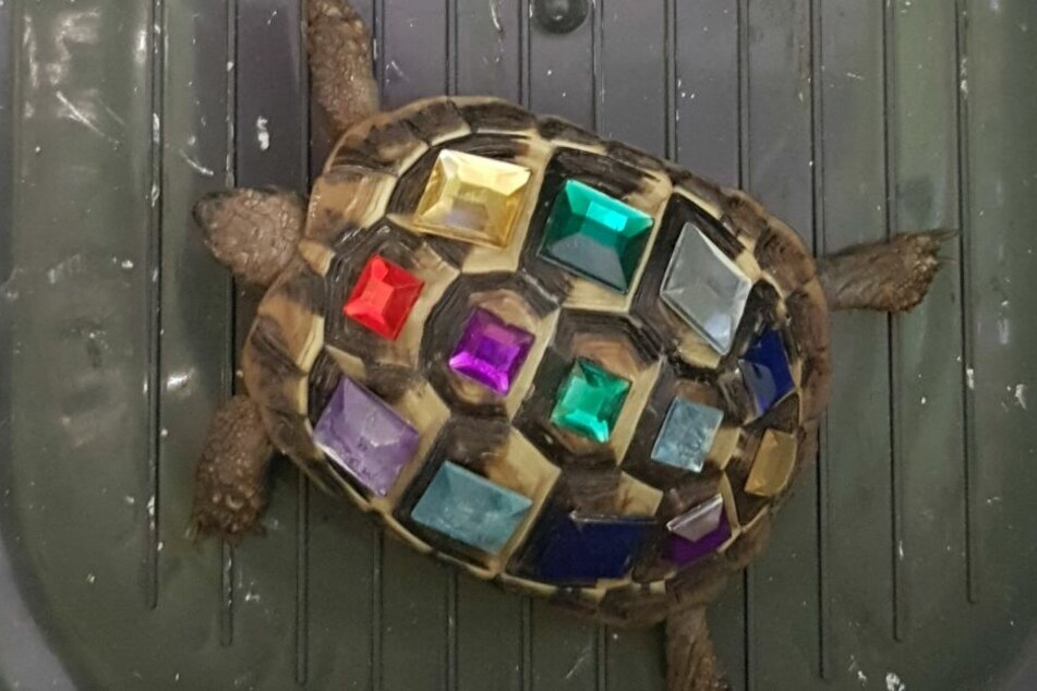 Auf dem Rücken der Schildkröte fanden sich zahlreiche Strasssteine.