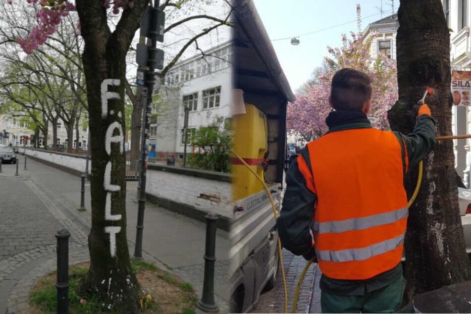 In Bonn wird gegen die Schmierereien vorgegangen.