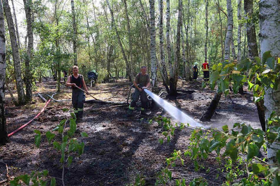 Querfeldein Schläuche im Wald verlegt: Das Waldstück Halde 5 in Zwickau-Oberhohndorf stand Samstag in Flammen.