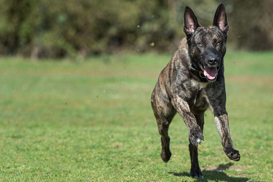 Schäferhund fällt Frau und ihren Hund an