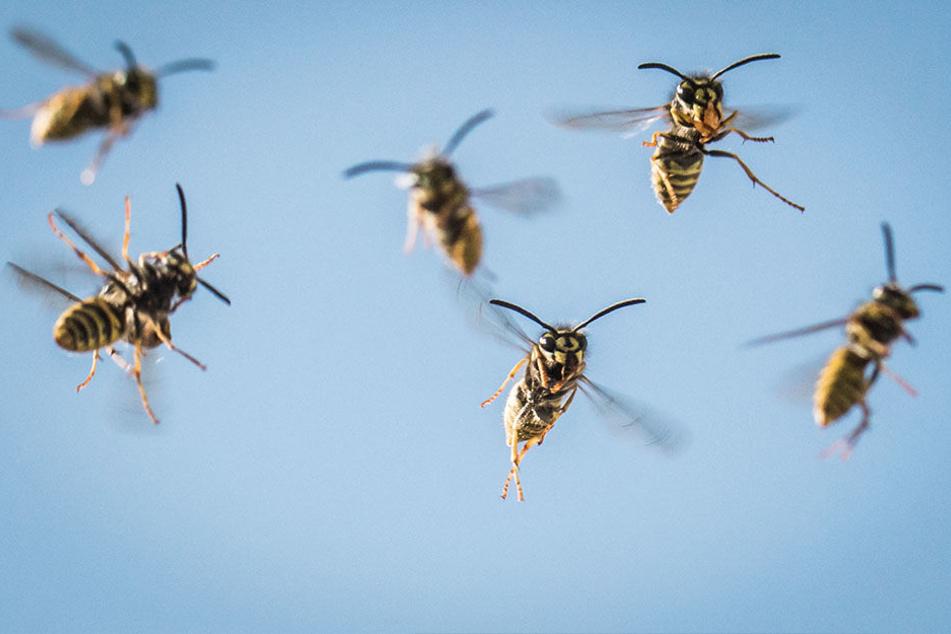 15 Kinder und ein Erwachsener wurden von Wespen gestochen. (Symbolbild)