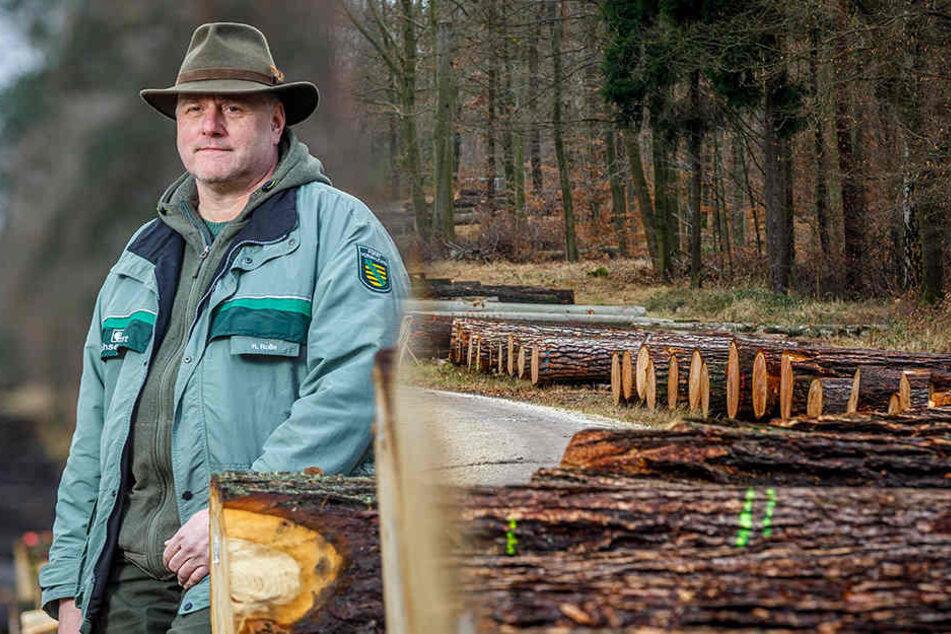 Hier liegen Tausende Euro am Wegesrand der Dresdner Heide