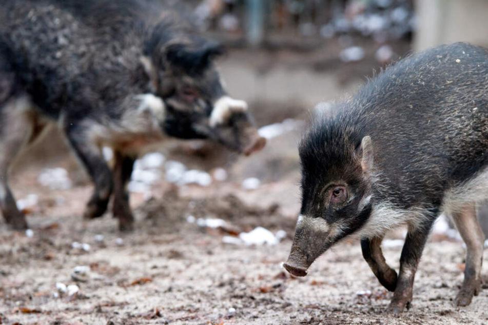 Chaos durch Brexit? Zoos und Tiergärten in Bayern in Sorge