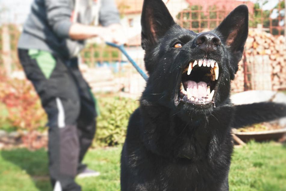 Die Männer hetzten den aggressiven Hund auf den 32-Jährigen. (Symbolbild)