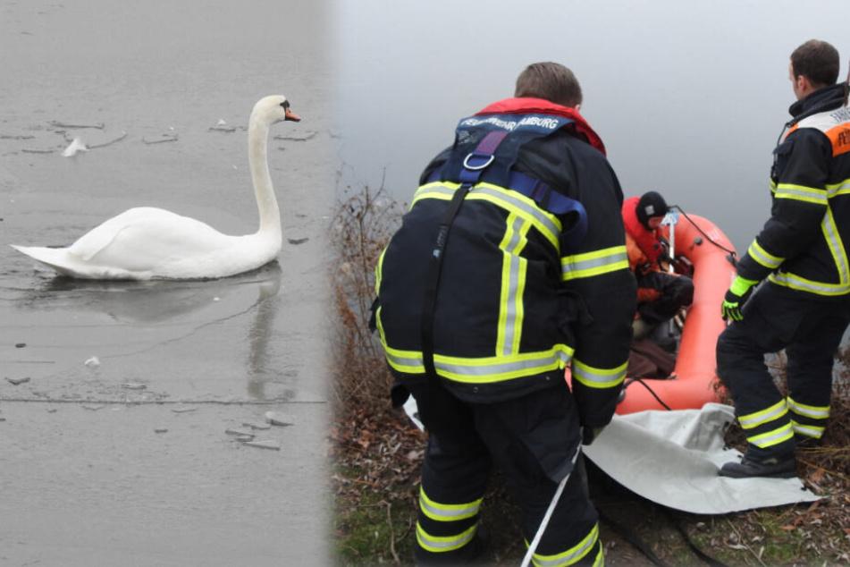 Tierischer Einsatz: Schwäne zwingen Feuerwehr aufs glatte Eis