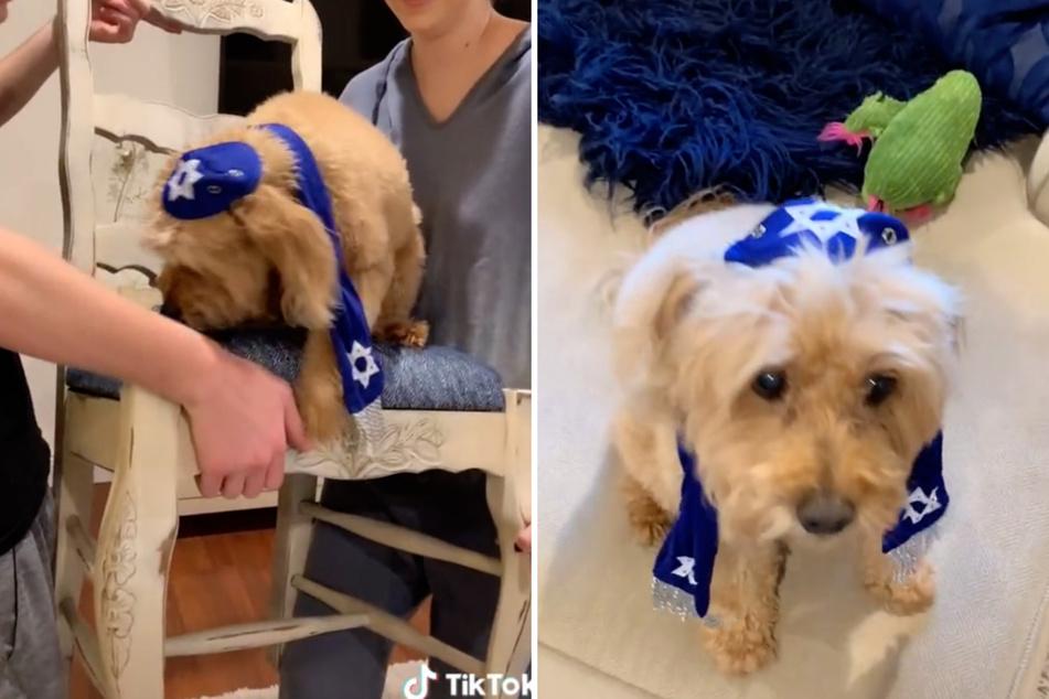 Geschwister schmeißen eine Bar Mitzwa für ihren Hund