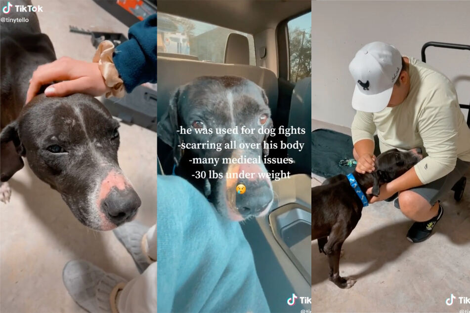 It's clear from the TikTok video that this dog was mistreated.