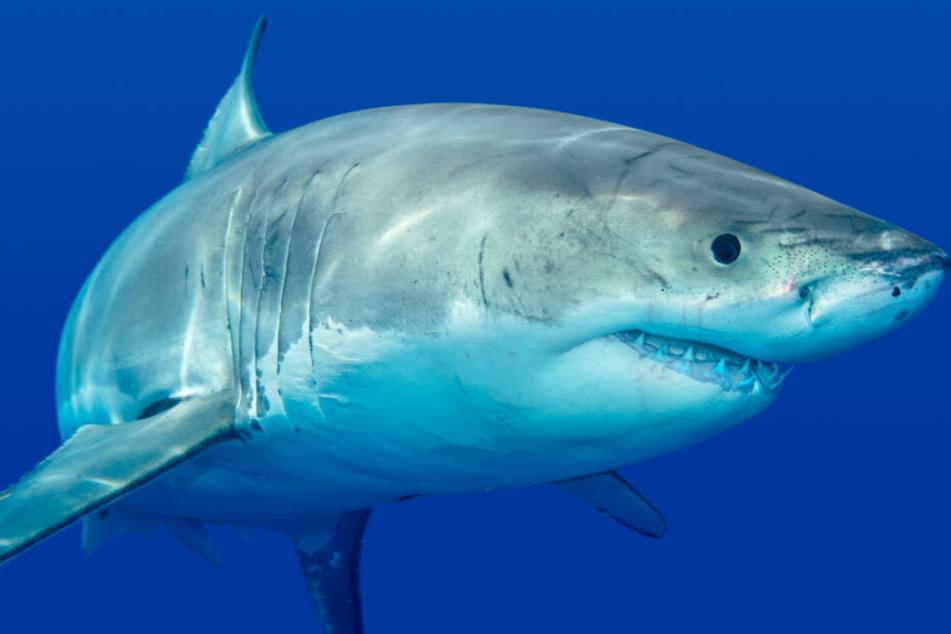 In der Nähe des weltgrößten Korallenriffs kommt es immer wieder zu Hai-Attacken (Symbolbild).