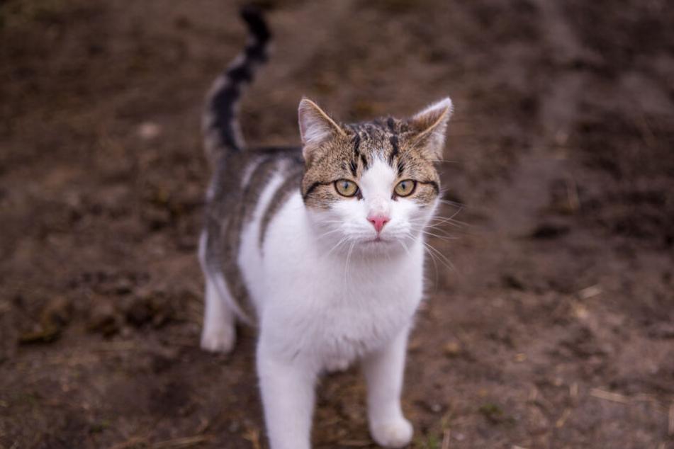 Irgendwann stirbt die geliebte Katze, aber was dann?