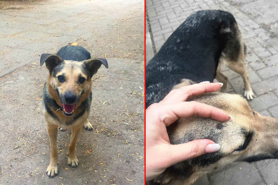 Die rumänische Straßenhündin Leika befindet sich jetzt Obhut des Tierschutzvereins Merseburg-Querfurt.
