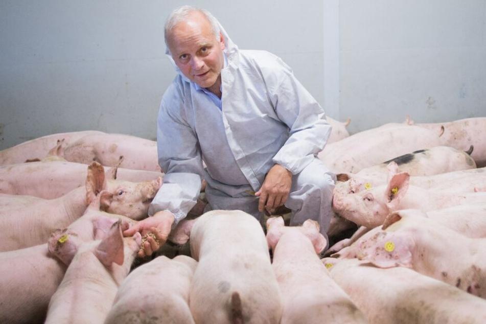 Der Bundestagsabgeordnete Johannes Röring (CDU), Präsident des Westfälisch-Lippischen Landwirtschaftsverbands (WLV) und Sprecher für den Bereich der Schweinehaltung im Deutschen Bauernverband, steht auf seinem Hof zwischen Mastschweinen.
