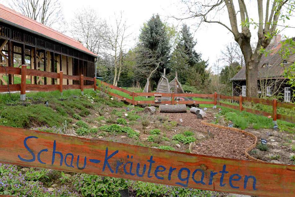 Im Kräutergarten soll der Nachwuchs lernen, dass Basilikum, Rosmarin und Minze nicht im Supermarkt gedeihen.