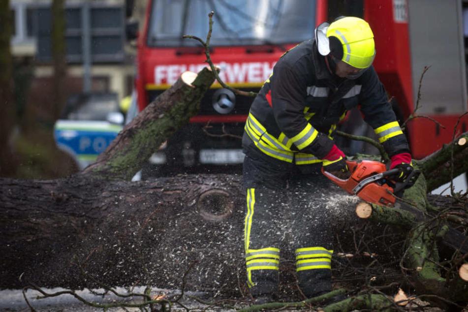 Besonders im Harz, wie hier in Wernigerode, musste die Feuerwehr zu wetterbedingten Einsätzen ausrücken.