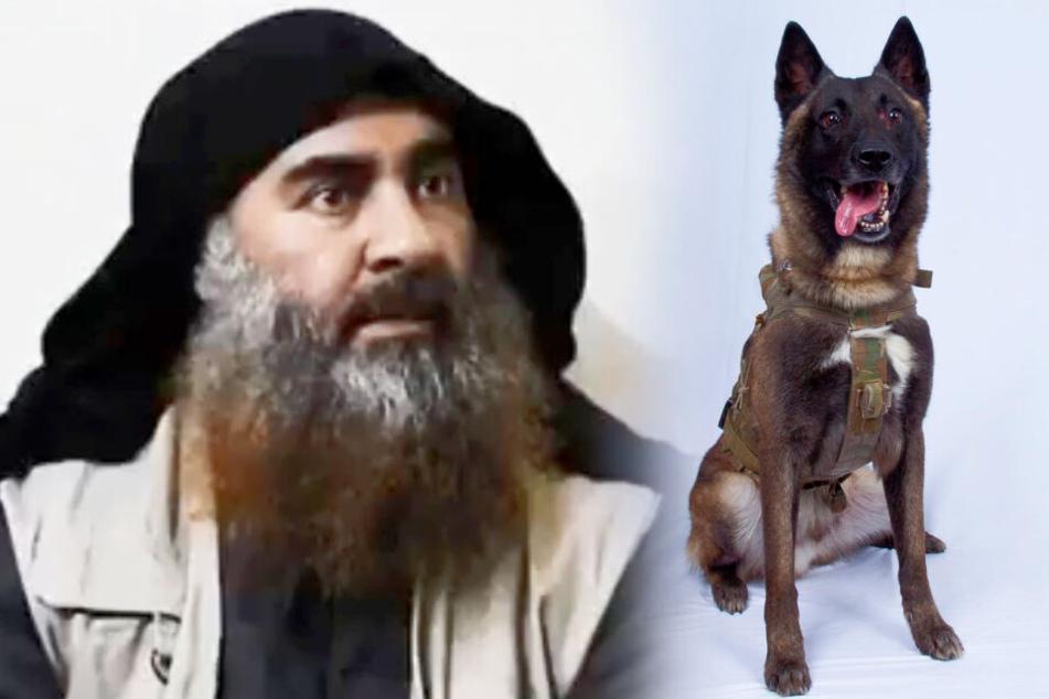 Terrorist Abu Bakr al-Bagdadi wurde von diesem Hund in den Tod getrieben.
