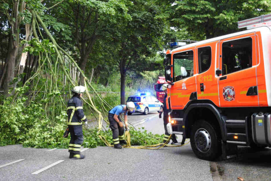 Die Einsatzkräfte bergen einen umgeknickten Baum von der Straße.