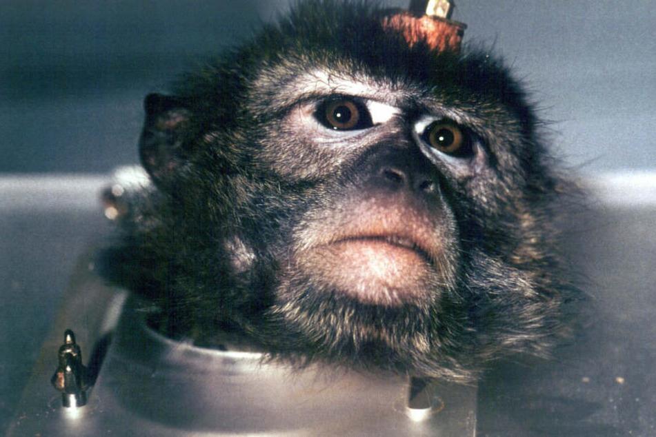 Wissenschaftliche Arbeiten, in denen es darum geht, Tierversuche zu reduzieren, können mit einem Förderpreis ausgezeichnet werden. Dieser ist mit 25.000 Euro dotiert. (Symbolbild)