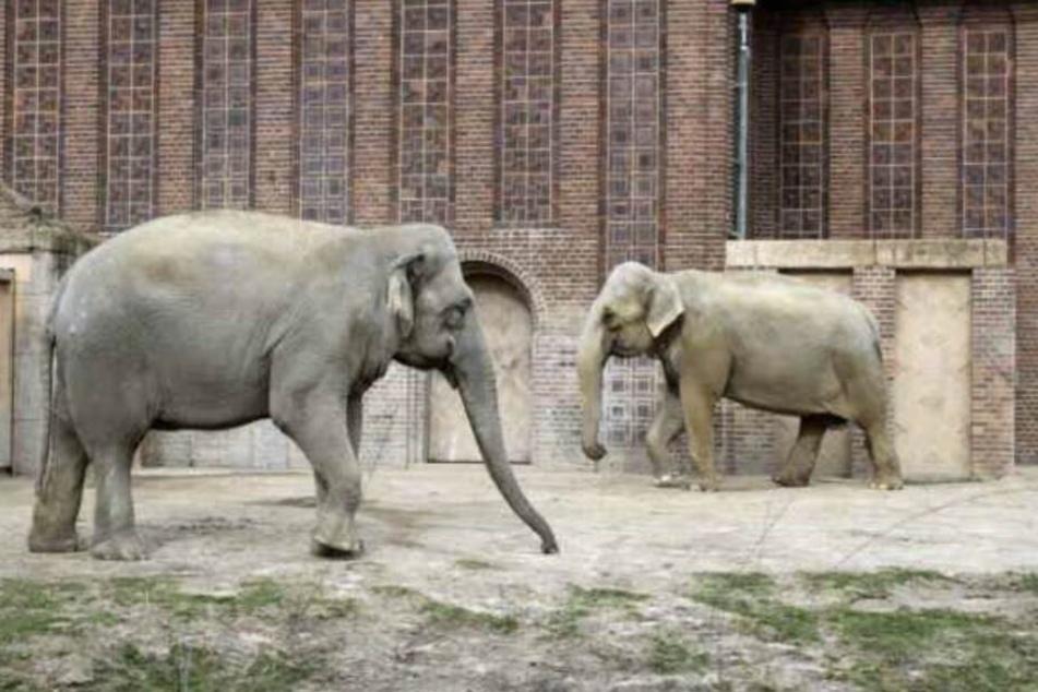 "Elefantenkuh ""Thura"" trug zwei Jahre lang tote Jungtiere im Bauch"