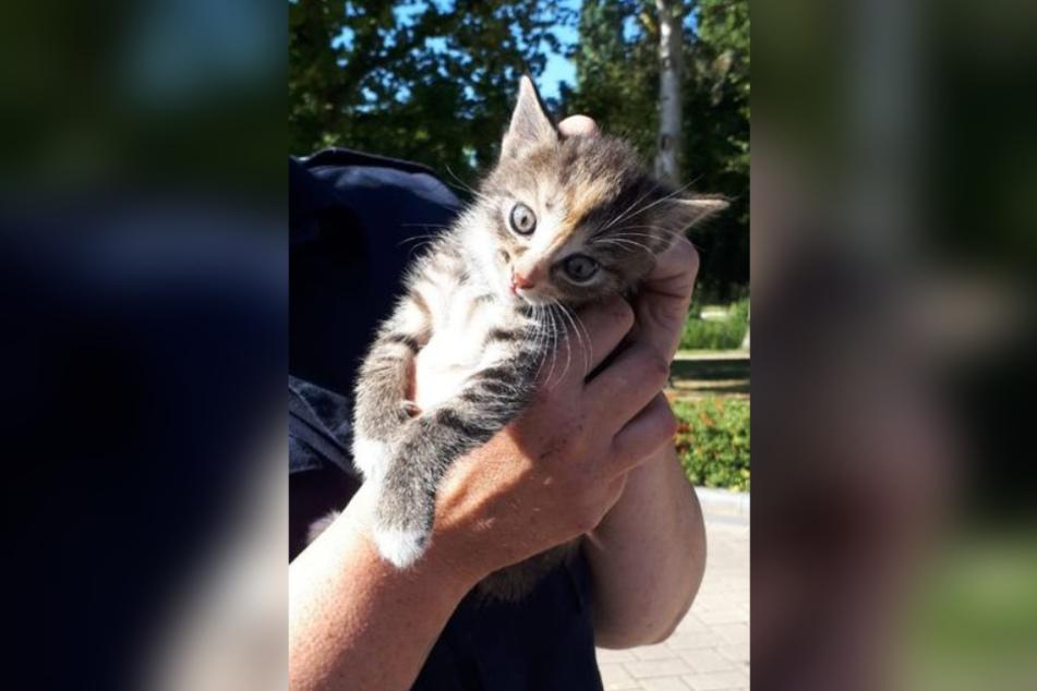 Dieses Kätzchen versteckte sich in einem Auto-Radkasten.