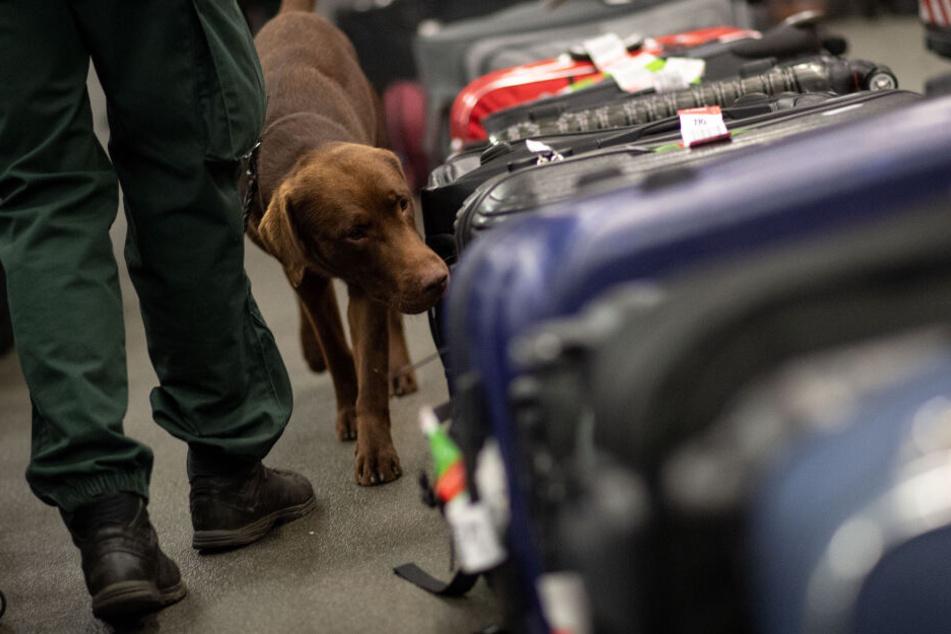 Bisher setzt die Polizei bei der Drogensuche vor allem auf Spürhunde (Symbolbild).