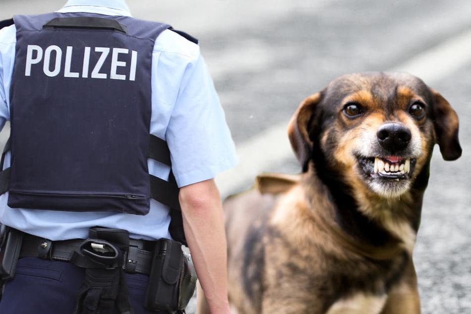 Streunende Hunde auf der A5 beschäftigen regelmäßig die Polizei (Symbolbild).